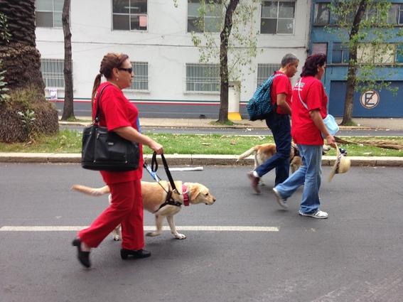 escuela para entrenar perros guia para ciegos cdmx 1