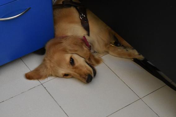 escuela para entrenar perros guia para ciegos cdmx 3