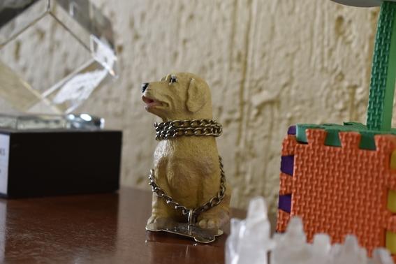escuela para entrenar perros guia para ciegos cdmx 4