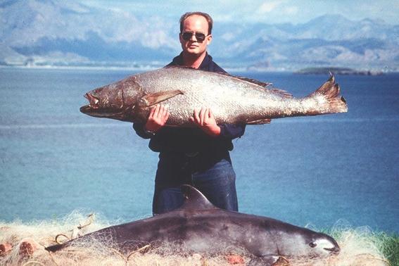vaquita marina y totoaba en peligro de extincion 2