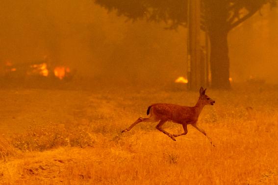 incendio carr en california imagenes 6