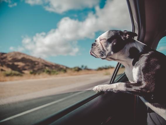jornada de bienestar animal en la unam esteriliza y vacunar a tu mascota gratis 4