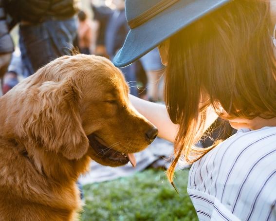 jornada de bienestar animal en la unam esteriliza y vacunar a tu mascota gratis 3