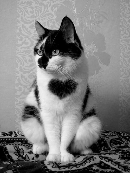 beneficios de tener gatos segun la ciencia 1