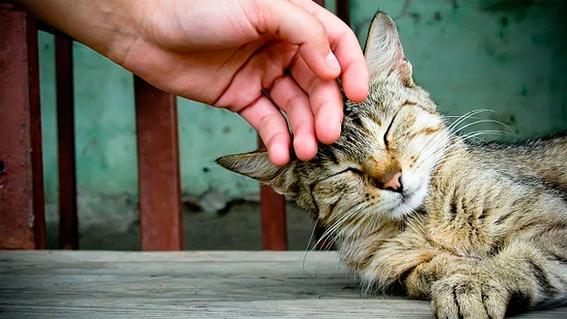 beneficios de tener gatos segun la ciencia 2