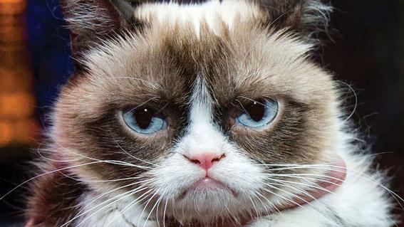 beneficios de tener gatos segun la ciencia 5