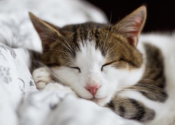 beneficios de tener gatos segun la ciencia 3