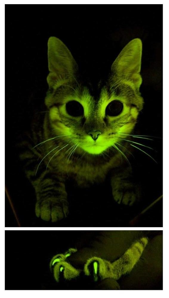 los gatos mas famosos en la ciencia 3