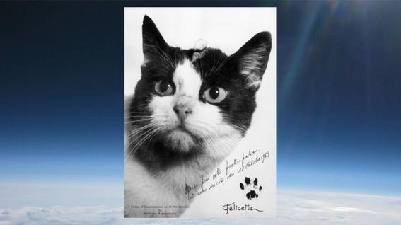 los gatos mas famosos en la ciencia 4