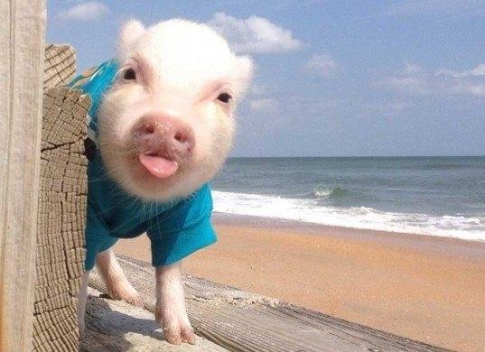 fotos de animales bebes reducen apetito por la carne 1