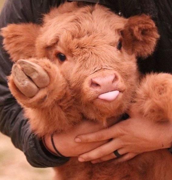 fotos de animales bebes reducen apetito por la carne 2