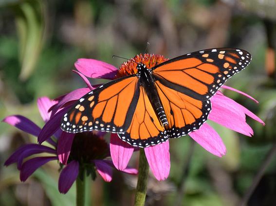 que es el efecto mariposa y su relacion con la teoria del caos 1