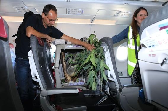koala viaja a escocia en un avion 3