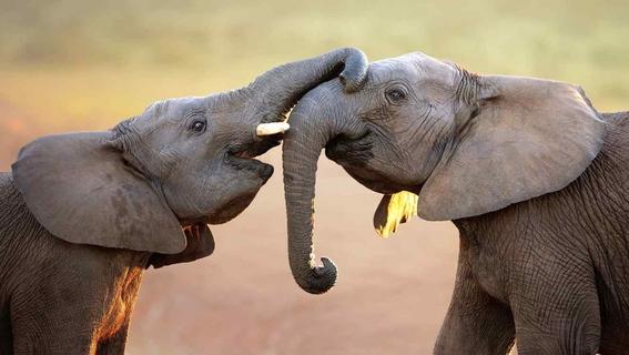 abejas alejan a los elefantes de los humanos 2