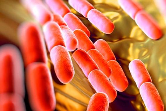 combatir la obesidad con bacterias en intestino 3