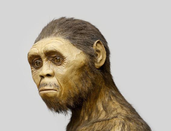 homo erectus se extinguio por flojo 2