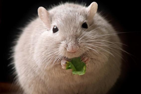 descubren formula para comer grasa sin engordar 2