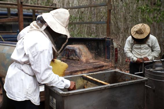 mujeres indigenas yucatecas productoras de miel 1