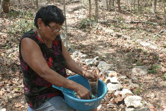 mujeres indigenas yucatecas productoras de miel 6