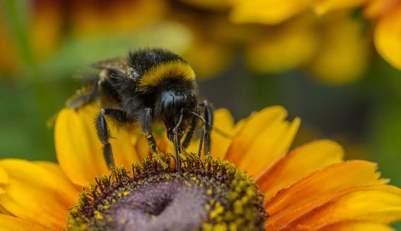 por que las abejas son tan importantes 3