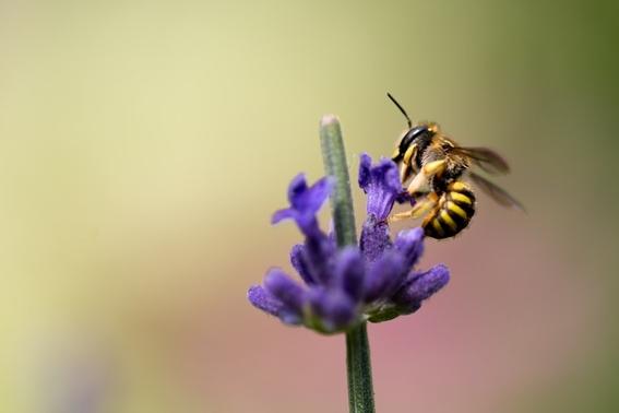 por que las abejas son tan importantes 1