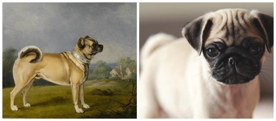 fotos de la deformacion canina y perros feos 1