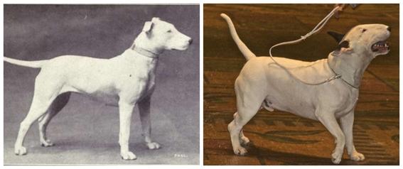 fotos de la deformacion canina y perros feos 3