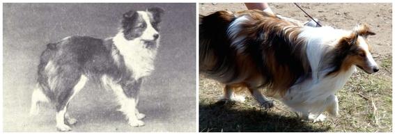 fotos de la deformacion canina y perros feos 4