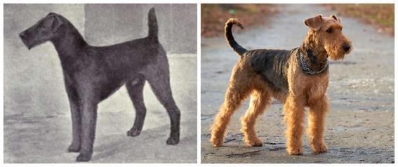 fotos de la deformacion canina y perros feos 5