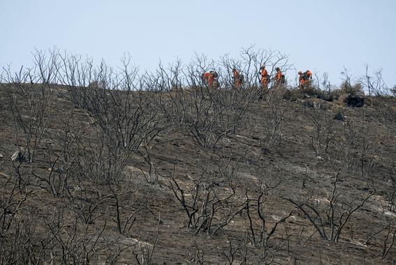 cientificos mexicanos crean sensores para incendios forestales 2