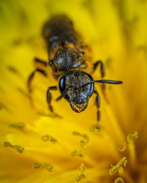mueren millones de abejas en quintana roo 2