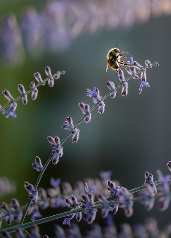 abejas mueren en quintana roo por plaguicidas 1