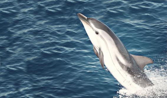 delfin asfixiado por panal 1