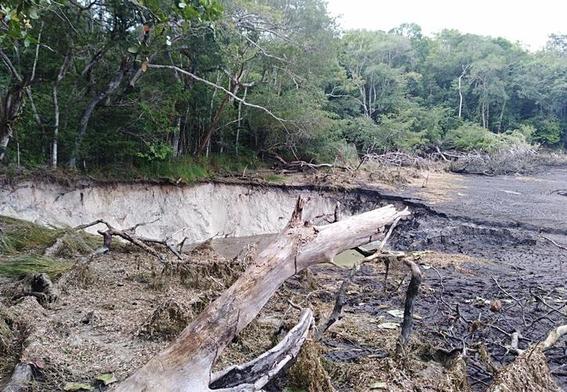 desaparece laguna de chakanbakan en quintana roo 5