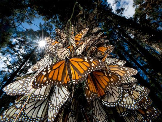 bienes naturales de mexico en lista de patrimonio mundial 5