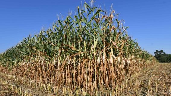 carbono en la atmosfera reducira nutrientes de alimentos 2