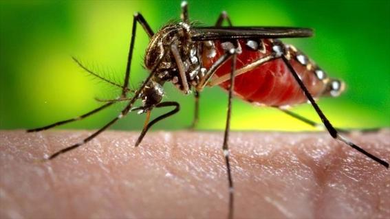 brote de zika en mexico 2