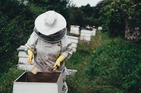 taller para ayudar a las abejas a no extinguirse en la cdmx 2