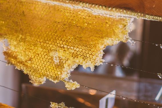 taller para ayudar a las abejas a no extinguirse en la cdmx 3