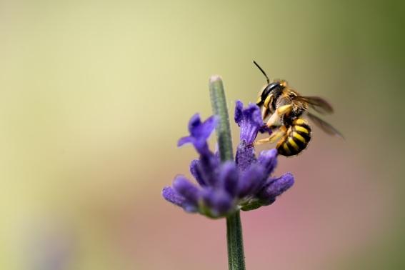 taller para ayudar a las abejas a no extinguirse en la cdmx 1