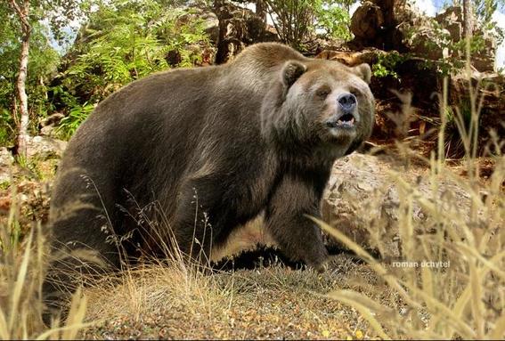 encuentran adn de oso cavernario en otra especie 1