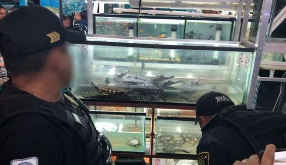 decomiso de reptiles en mercado morelos 1