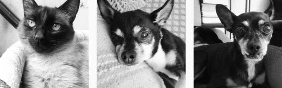 adopcion animal responsable 4