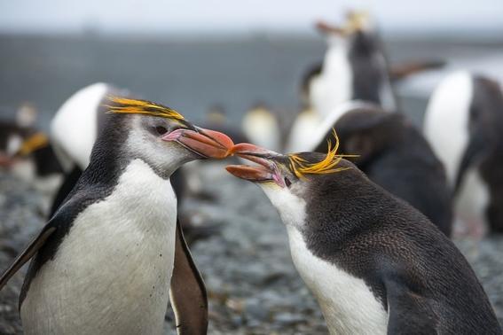 maraton de los pingüinos de nueva zelanda 1