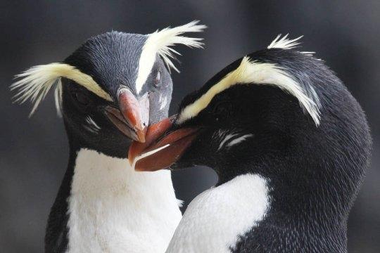 maraton de los pingüinos de nueva zelanda 3