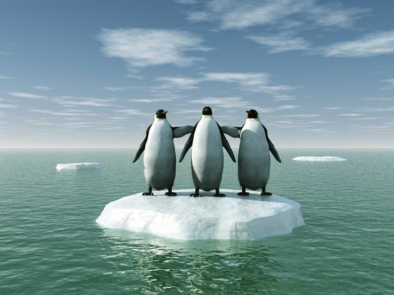 maraton de los pingüinos de nueva zelanda 4