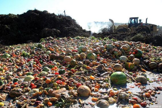 evitar que se tire comida a la basura en mexico 1