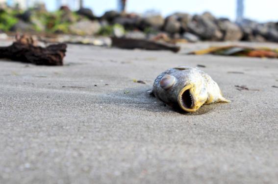 peces muertos en boca del rio 2