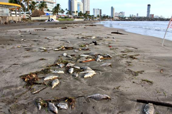peces muertos en boca del rio 1