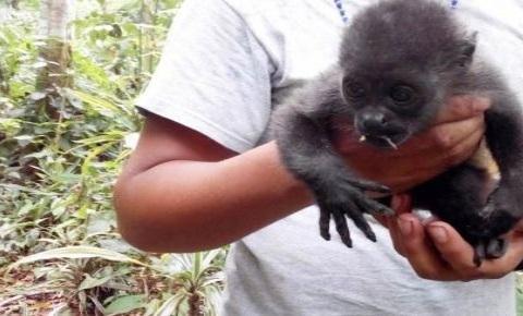 investigan muerte de monos aulladores 2